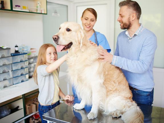 Window Creativity For Veterinary Centers